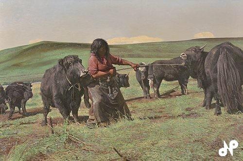 牛を引っぱる(チベット)